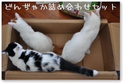 zoo3_20091004020235.jpg