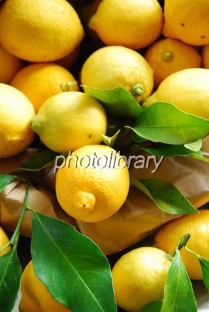 445269 レモン