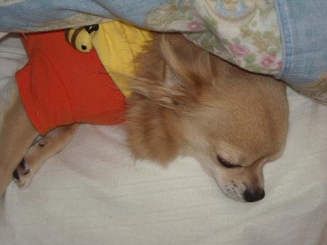 ロンの寝姿