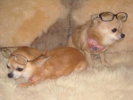 眼鏡のおいら達1