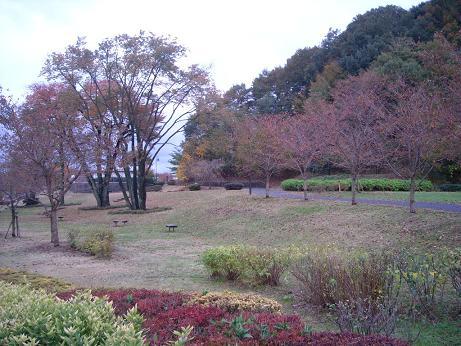 11.14違う方向宇津貫公園