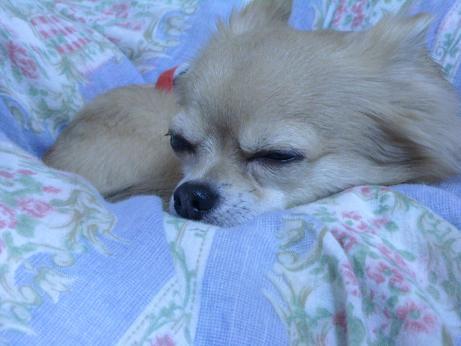 ロンの寝顔