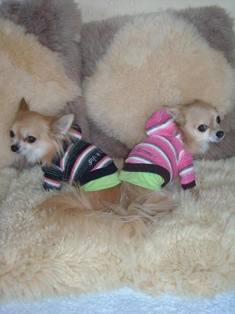 フィフィ&ロメオのジャンパーの2ワン達
