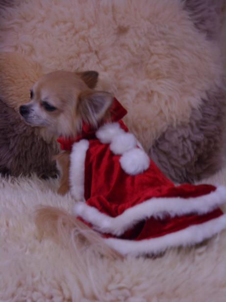 12月23日サンタさんのチィ君