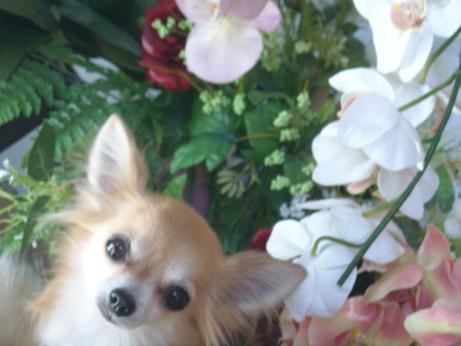 10年1月9日可愛いチィ君お花畑