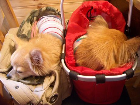カフェで寝ているおいら達1月18日