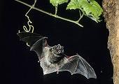 barbed-bat-whispers_25437_170.jpg