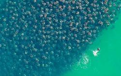 environmental-photographer-year-2010-manta-rays_26726_big.jpg