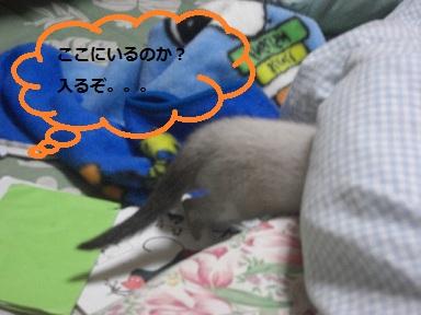 ABCD010.jpg