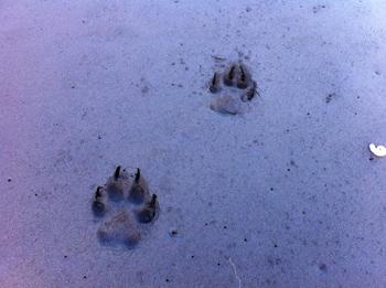 羊の国のラブラドール絵日記、冬のビーチにて写真4