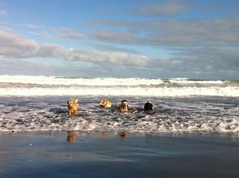 羊の国のラブラドール絵日記、冬のビーチにて写真7
