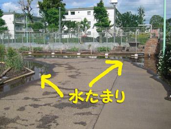 お散歩コースの水たまり