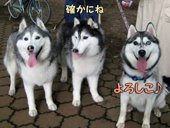3ハスキーズ