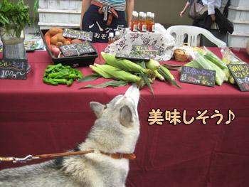 マルシェのお野菜