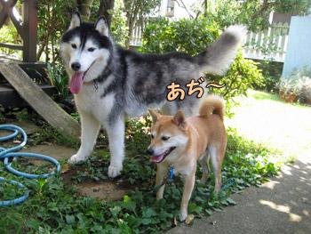 晴ちゃん&ポトフ
