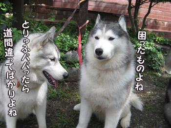 バルスちゃん&ヴィスナちゃん