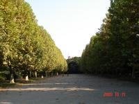 フランス式整形庭園プラタナス並木