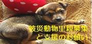 banner_inunekodocu_hisai2.jpg