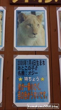 ホワイトライオン_2