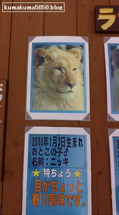 ホワイトライオン_1