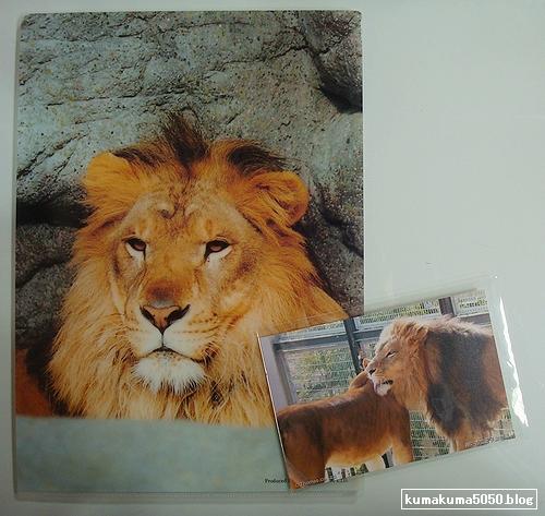 ライオン_137