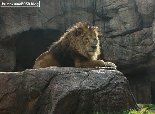 ライオン_189
