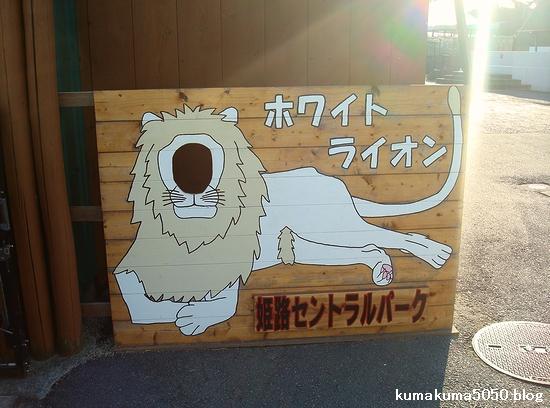ホワイトライオン_3