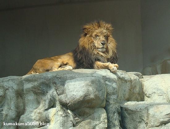 ライオン_210