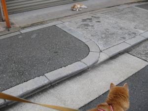 猫がいてる