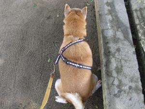 歩きながら