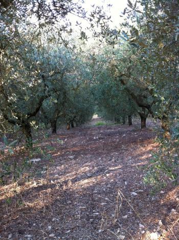 オルチョ畑その2