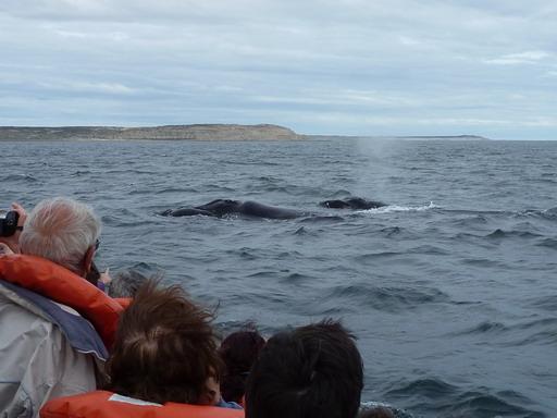 6nov2010 潮を噴くクジラの親子