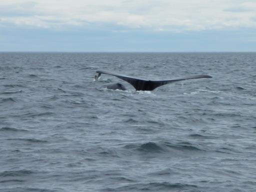 6nov2010 クジラの尾びれ