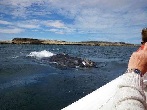 6nov2010 ボートに寄ってくるクジラ