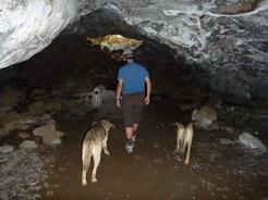 26nov2010 律儀に洞窟内にもついてきた三匹