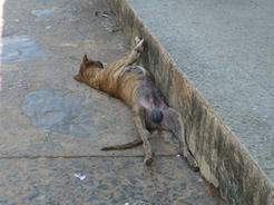 10apr2011 あられもない格好で昼寝する犬