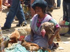10jun2011 鶏や七面鳥・・・