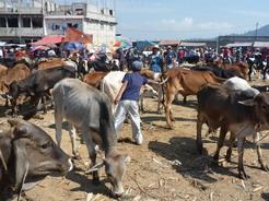 10jun2011 サン・フランシスコの金曜家畜市