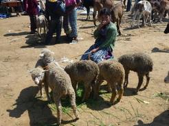 10jun2011 子羊を連れてた女の子