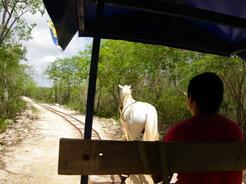 14jun2011 馬の引くトロッコでセノーテを巡る