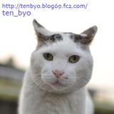 ☆ 点猫 blog  ☆ 大阪の日曜猫写真家の猫写真