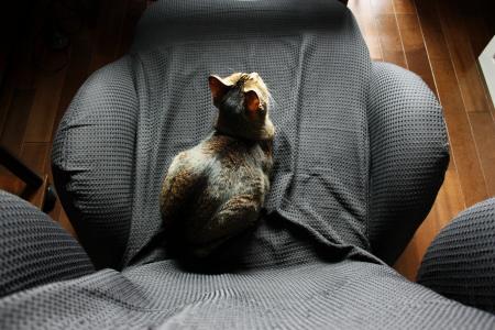 おっとの椅子