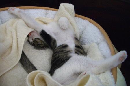 2005年、子猫ジェリー