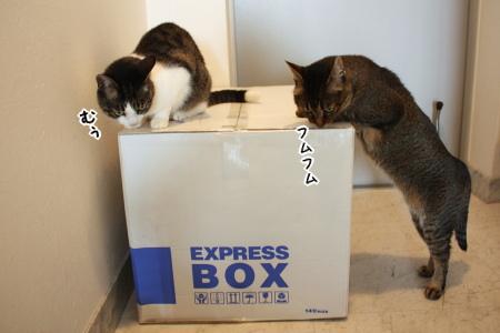 白い箱の中身は?