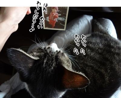 子ミルラと猫あんか