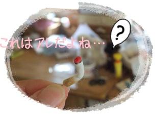 2011_09290013.jpg