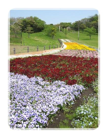 観音崎公園の花壇
