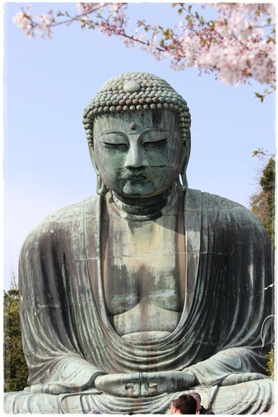 鎌倉大仏と名残の桜