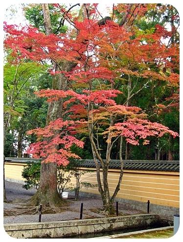京都どすえ 2
