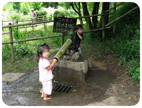 梅雨時の舞岡公園 1
